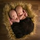 Twin boys newborn baby photo by Lone Tree photographer Kristina Lynn Photography & Design