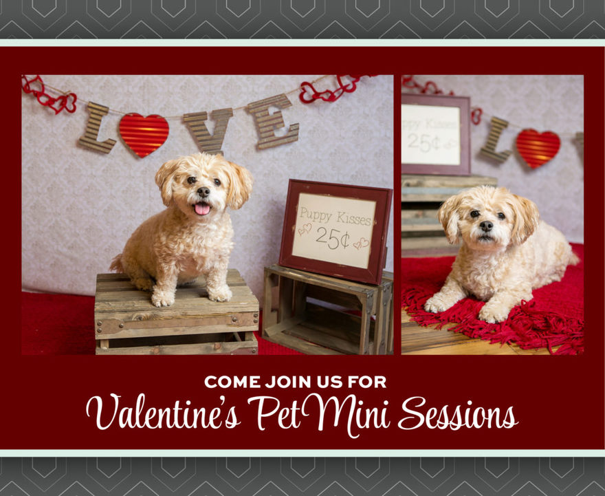 Bring your furry friend to Kristina Lynn Photography & Design for a Valentine