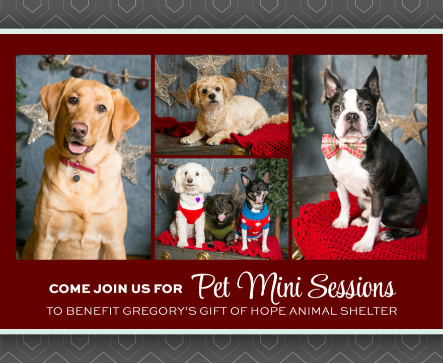 Come join us for holiday pet mini sessions at Kristina Lynn Photography & Design to benefit Gregory